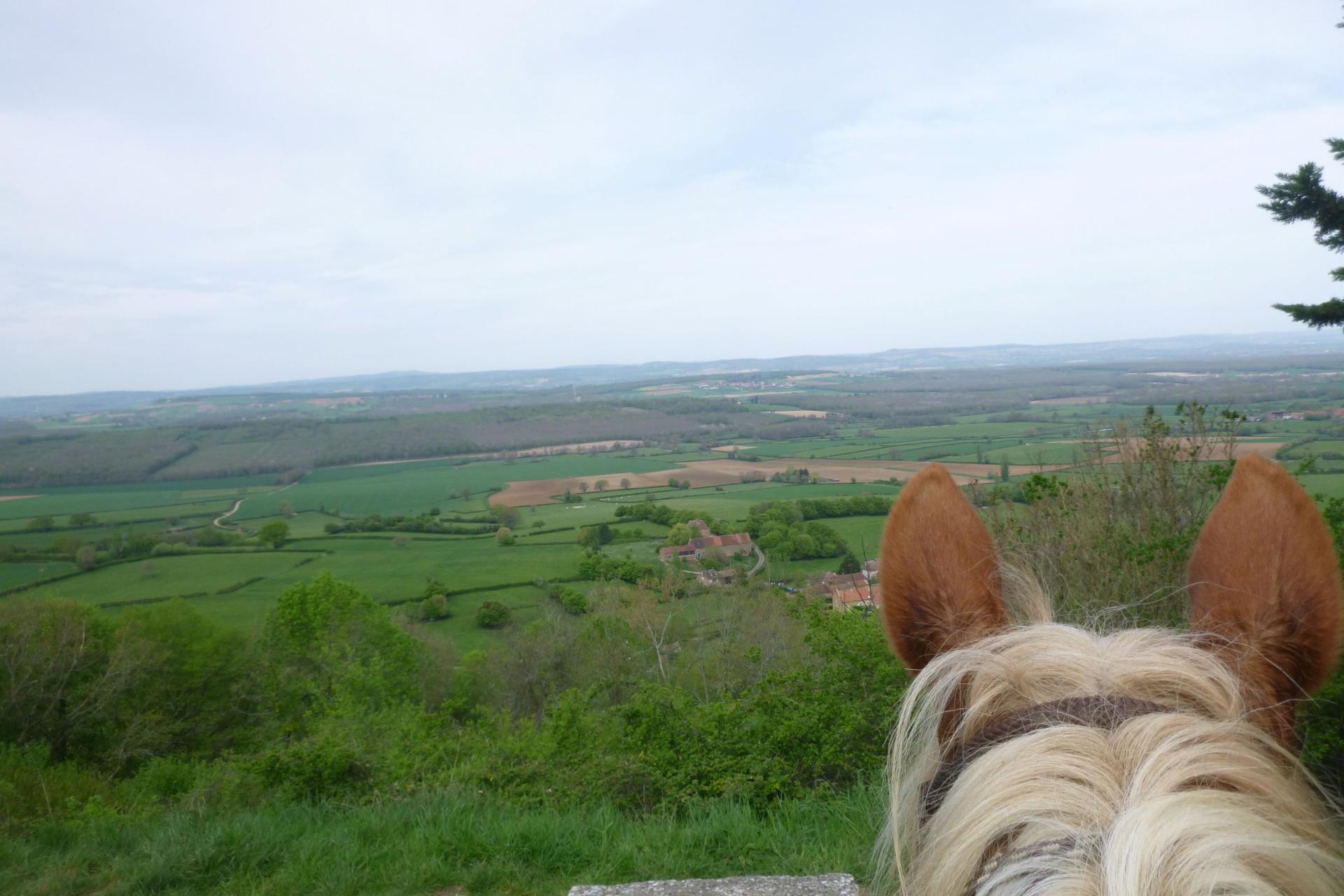 cheval paysage reduit